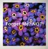 Diane Nighswander <i>Forget Me? Not!</i>